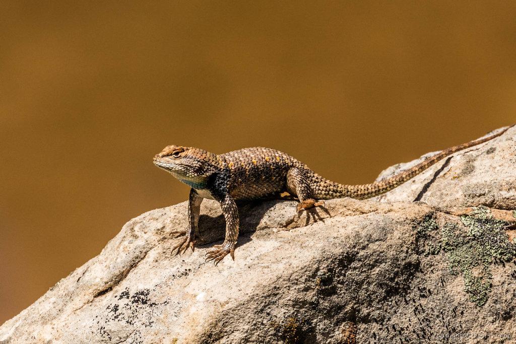 Zion Wildlife