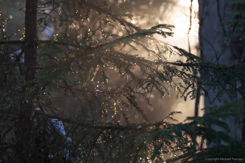 Baum bei Tauwetter im Gegenlicht