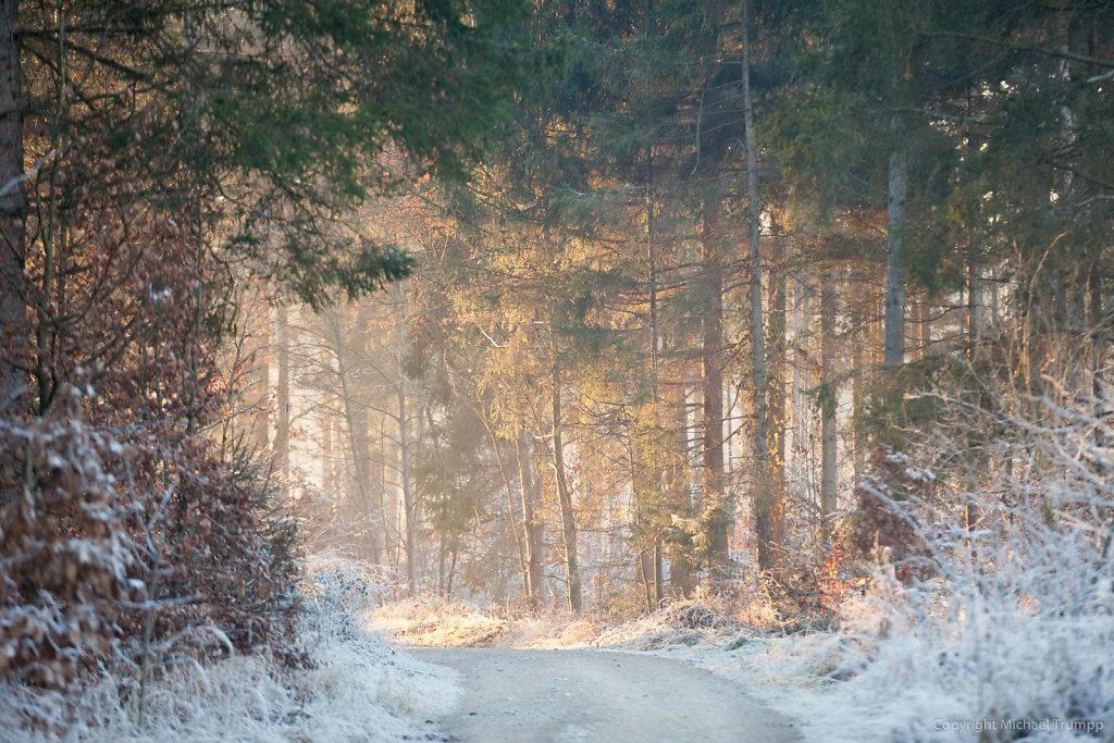 Verheißungsvoller Winterspazierweg