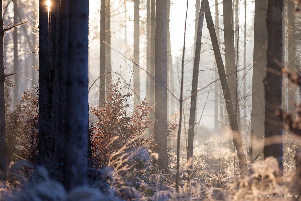 Sonnendurchflutetes Winterdickicht