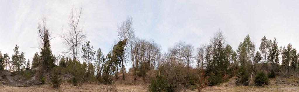360 Grad Panorama im Kraillinger Forst